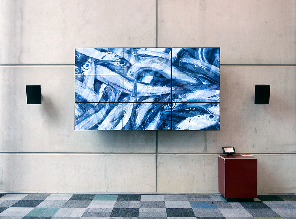 'Oil & Water', HD video installed on loop in 'Hub' Gallery AUT Student Centre, 2014